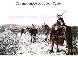 Common mode of travel - Camel